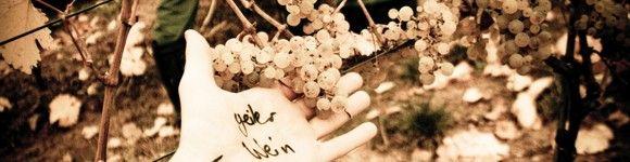 Weingut des Monats:<br> <b>Espenhof & Nico Espenschied</b>